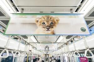 〈2021.7.16〉動物たちの胸キュン写真に囲まれた電車が登場!
